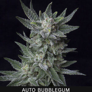 TH Seeds Bubblegum Autoflower 5pk
