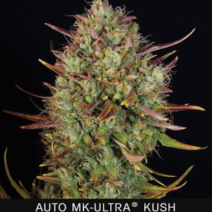 TH Seeds MK-Ultra Kush Autoflower 5pk