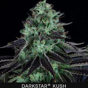 TH Seeds Darkstar Feminiseret 5pk